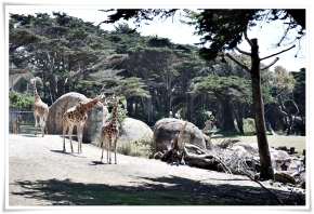 travel guide: 3 tips for taking your kids to the san franciscozoo