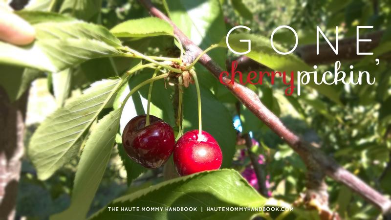 gone cherry pickin