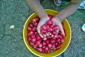 travel guide: gone cherry pickin'