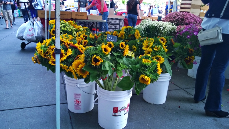 ferry plaza sunflowers