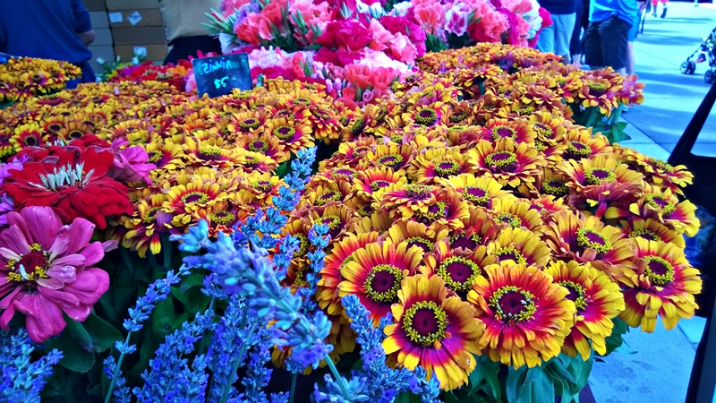 ferry plaza zinnias