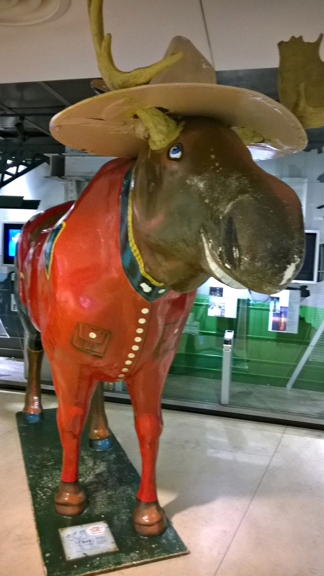 the cn tower moose